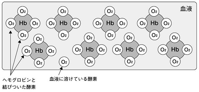 酸素が結合したヘモグロビンを含む赤血球が血液に乗って流れている図